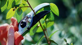 Flower and Plant Pruning